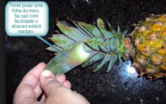Como saber se um abacaxi está maduro
